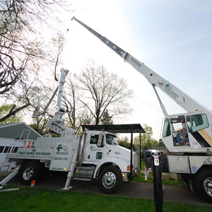 Audubon Tree Service NJ