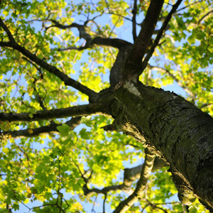 Certified Arborist in South Jersey | C.C. Tree Experts