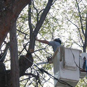 Expert Tree Service Mount Laurel NJ
