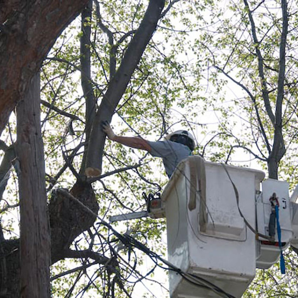 CC Tree Experts Tree Service