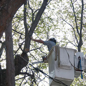Tree Removal Gloucester County NJ