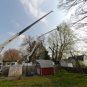 Tree Removal Haddon Heights NJ Tree Service Experts