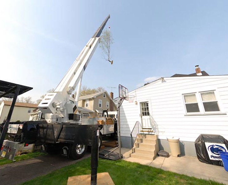 Tree Removal Voorhees NJ: Why Remove a Tree?