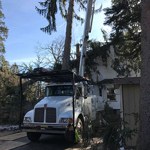 Tree Service Riverside NJ