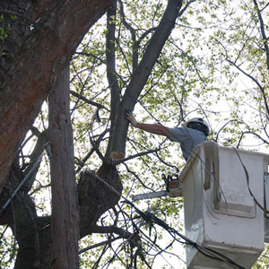 Tree Service Voorhees NJ | Fall Tree Maintenance | CC Tree