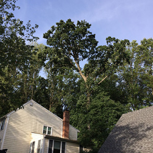 Emergency Tree Removal South Jersey