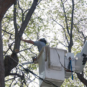 Tree Trimming Companies in South Jersey